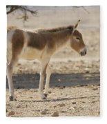 Onager Equus Hemionus Fleece Blanket