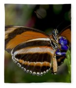 Orange Banded Butterfly Fleece Blanket