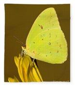 Orange Barred Sulfur Butterfly Fleece Blanket