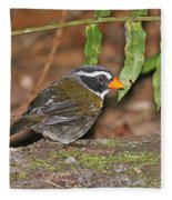 Orange-billed Sparrow Fleece Blanket