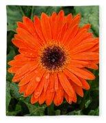 Orange Gerber Daisy 3 Fleece Blanket