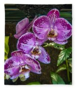 Orchid Flowers Growing Through Old Wooden Picture Frame Fleece Blanket