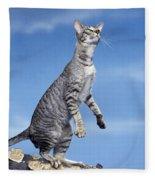Oriental Cat Fleece Blanket