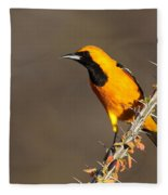 Oriole On Ocotillo Fleece Blanket
