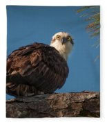 Osprey In Pine 3 Fleece Blanket