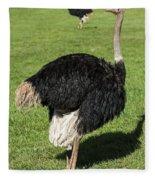 Ostrich 1 Fleece Blanket
