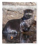 Otter Posing Fleece Blanket
