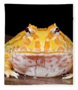 Pac Man Frog Ceratophrys On A Rock Fleece Blanket