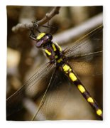 Pacific Spiketail Dragonfly On Mt Tamalpais 2 Fleece Blanket