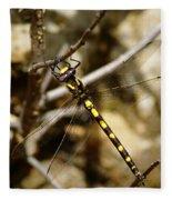 Pacific Spiketail Dragonfly On Mt Tamalpais Fleece Blanket