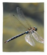 Paddletail Darner In Flight Fleece Blanket