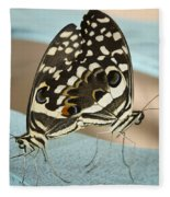 Pair Of Citrus Swallowtail Butterflies  Fleece Blanket
