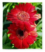 Pair Of Red Gerber Daisy Flowers With Ladybug Fleece Blanket