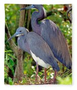 Pair Of Tricolored Heron At Nest Fleece Blanket