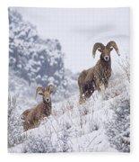 Pair Of Winter Rams Fleece Blanket