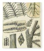 Paleozoic Flora, Calamites, Illustration Fleece Blanket