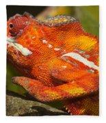 panther chameleon from Madagascar 3 Fleece Blanket