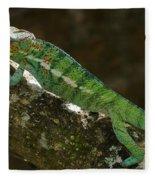 panther chameleon from Madagascar 5 Fleece Blanket