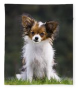 Papillon Dog Fleece Blanket