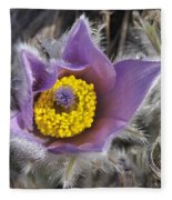 Pasque Flower Pulsatilla Halleri Fleece Blanket
