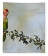 Peach Faced Love Bird Fleece Blanket