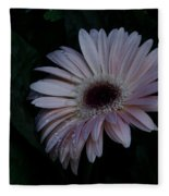 Peach Gerba Daisy  Fleece Blanket