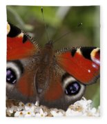 Peacock Butterfly Fleece Blanket
