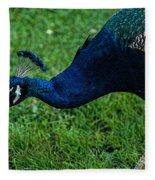 Peacock Portrait 4 Fleece Blanket