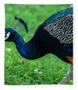 Peacock Portrait 5 Fleece Blanket
