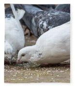 Pecking Pigeons Fleece Blanket