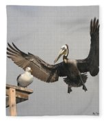 Pelican Wins Sea Gull Looses Fleece Blanket