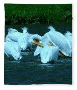 Pelicans Hanging Out Fleece Blanket