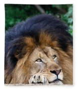 Pensive Lion Fleece Blanket