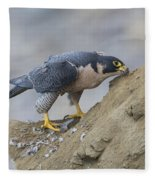 Peregrine Cleaning Beak Fleece Blanket