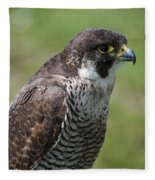 Peregrine Falcon 1 Fleece Blanket