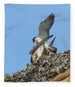 Peregrine Falcons - 5 Fleece Blanket