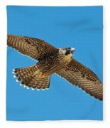 Peregrine Young Screaming For Food Fleece Blanket