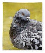 Pigeon Bath Fleece Blanket