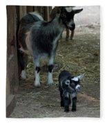 Pigmy Goats Fleece Blanket