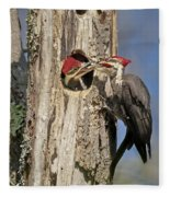 Pileated Woodpecker And Chick Fleece Blanket