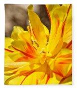 Pin Striped Tulip Fleece Blanket