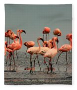 Pink Famingo Fleece Blanket