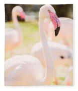 Pink Flamingo Portrait Fleece Blanket