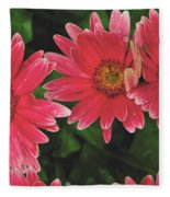 Pink Gerbera Daisy Fleece Blanket