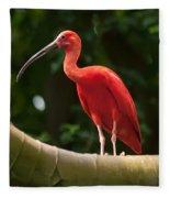 Pink Tropical Bird Fleece Blanket