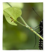 Pipevine Swallowtail Mother With Eggs Fleece Blanket