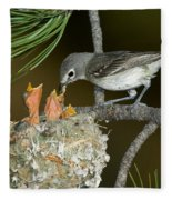 Plumbeous Vireo Feeding Chicks In Nest Fleece Blanket