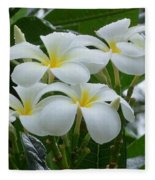 Plumeria In The Rain Fleece Blanket