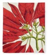 Poinsettia Pulcherrima Fleece Blanket
