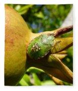 Pomegranate Bug Jewel Case Fleece Blanket